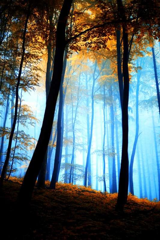 Картина по номерам 40x50 Осенний лес утром